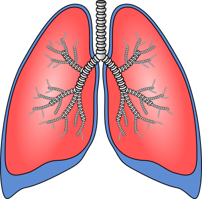 Boyle's law example: Human lungs