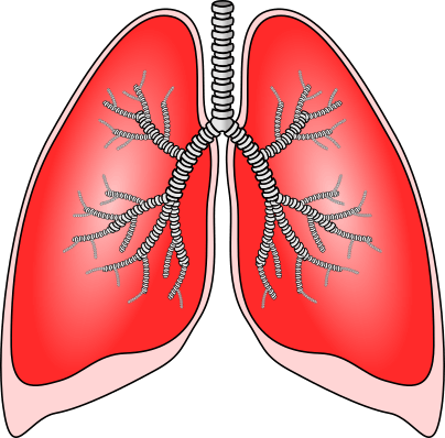 The human lungs are perfect examples of Charles's law.